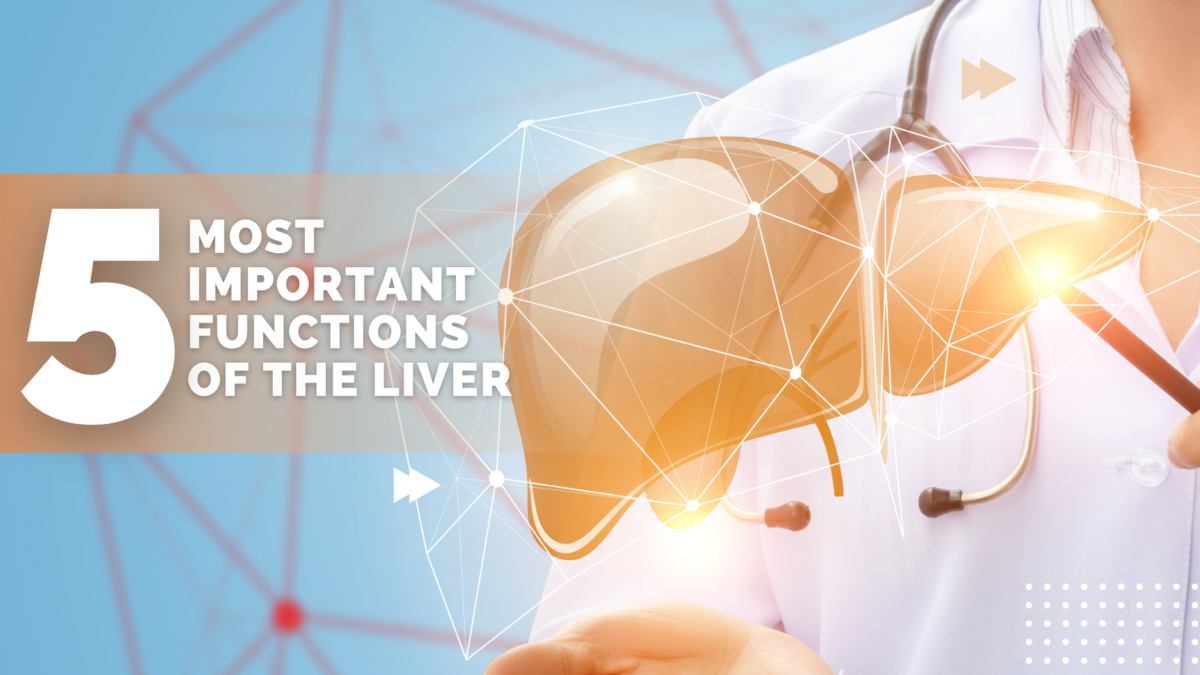 5 most important functions of the liver